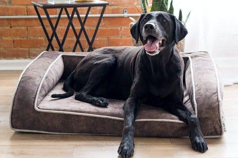 Magasiner les lits pour animal de compagnie