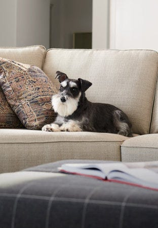 Shop pet friendly fabrics