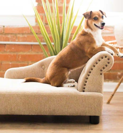 Shop Pet Beds